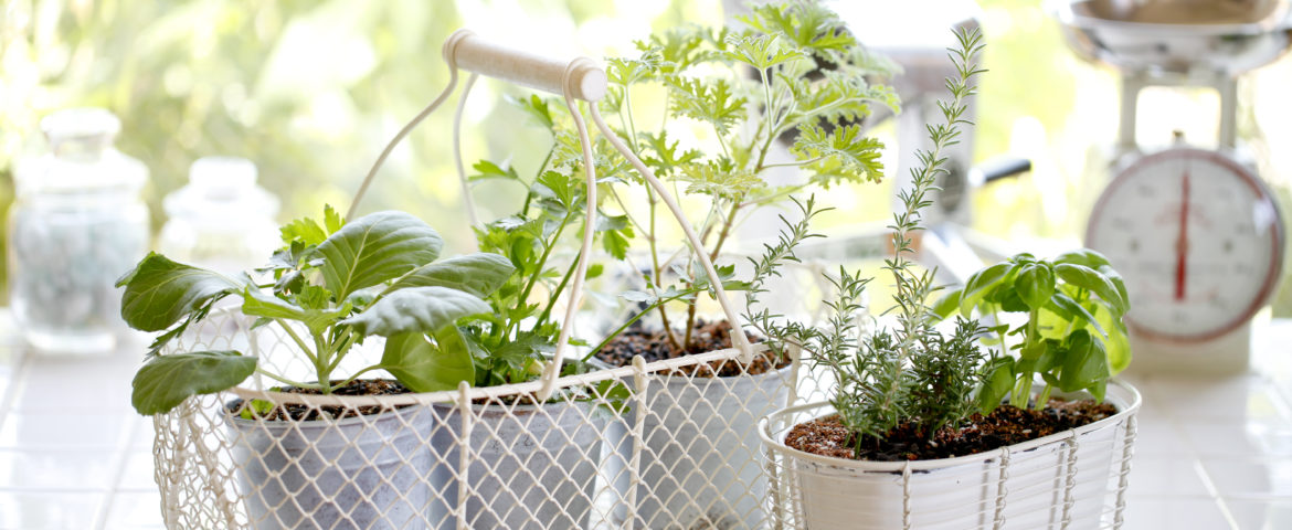 Herb's the Word: The Health Benefits of Cooking With Herbs