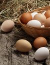 All Egg Everything: Five Reasons We Love Eggs