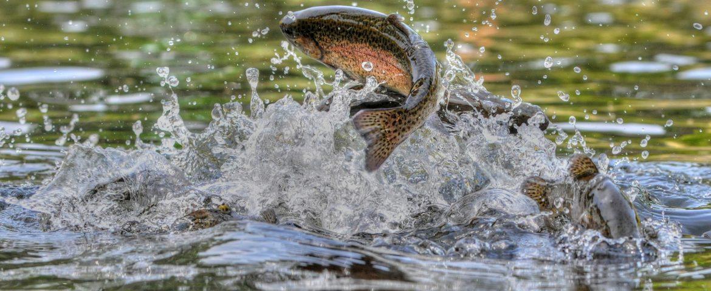 Michigan Fish are Worth the Catch