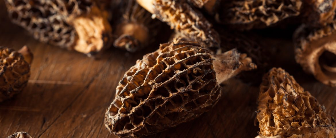 Veggie Tales: Morels, a Mouthwatering Michigan Miracle