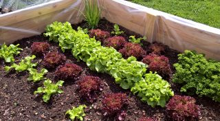think health personal wellness container garden