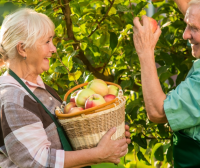 Original Medicare vs. Medicare Advantage: Apples and Oranges?