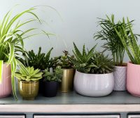 5 Health Benefits of Plants and Green Spaces in Your Home