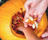 Trick or Treat: How to Make the Most of Pumpkin Insides