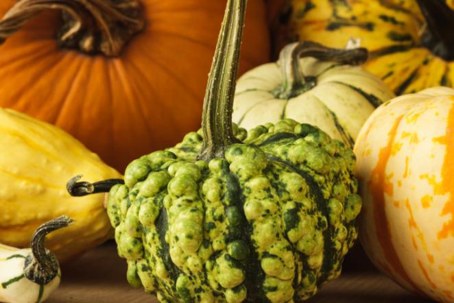 Veggie Tales: Health Benefits of Michigan Fall Harvest Foods