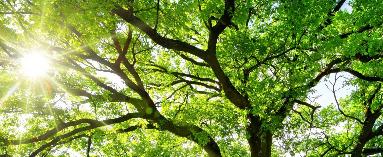 Health Benefits of Trees
